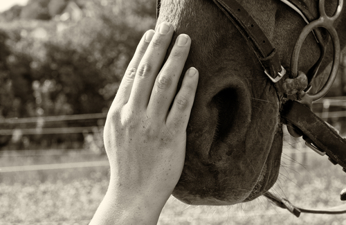 My Therapist is Paid in Hay ~ The Surprising Way Horses Can Help Us